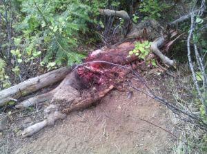 wolf sheep kill 2